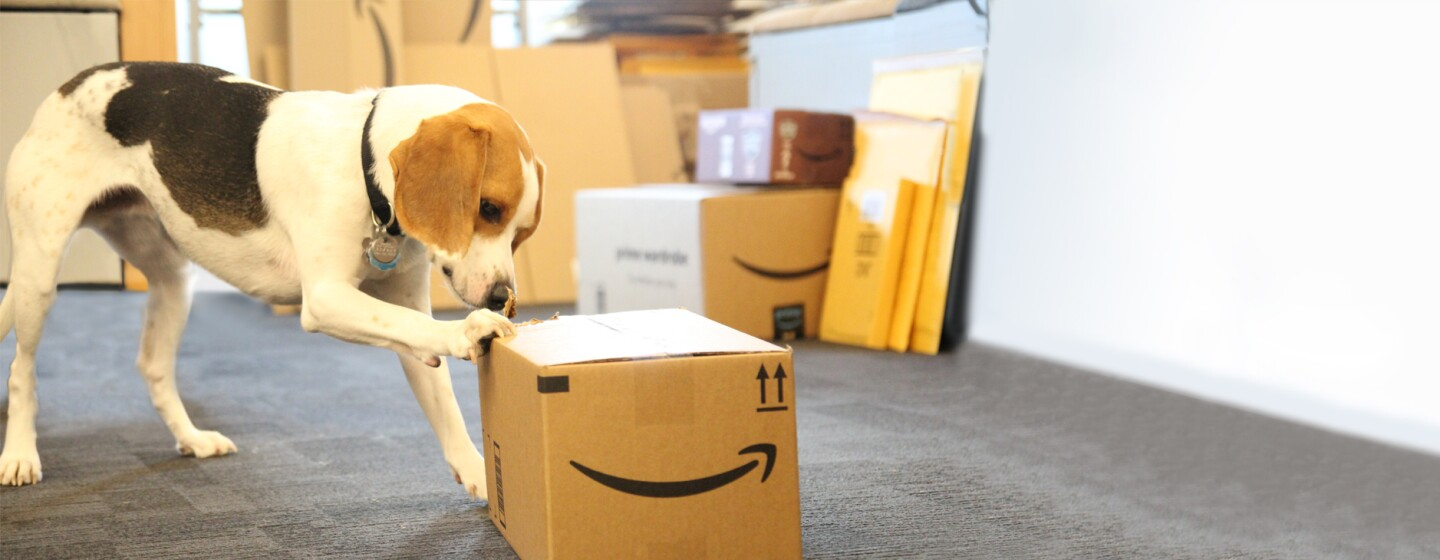 An Amazon dog curiously touches an Amazon package.