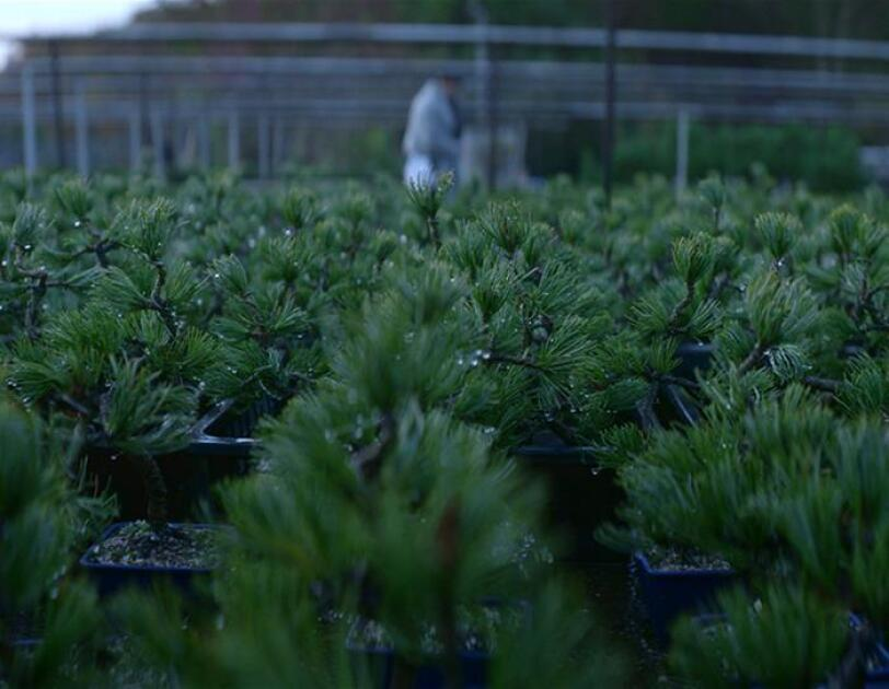 「盆栽愛」が導いた盆栽通販の可能性
