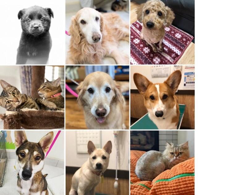 一般社団法人アニマルハートレスキューで保護された犬猫たち