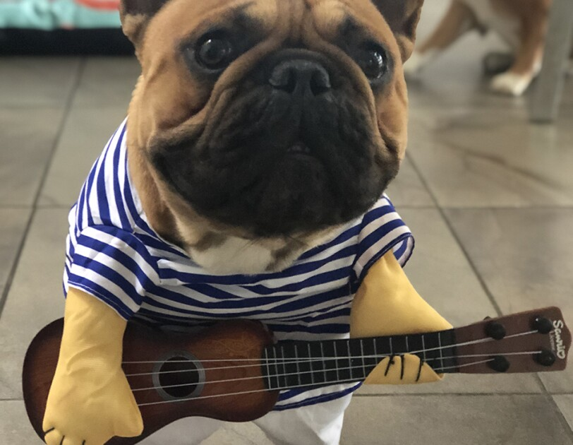 "Dog wearing costume comprised of navy and white striped shirt, white pants, and a guitar, which is ""played"" with fake arms that are part of the costume."
