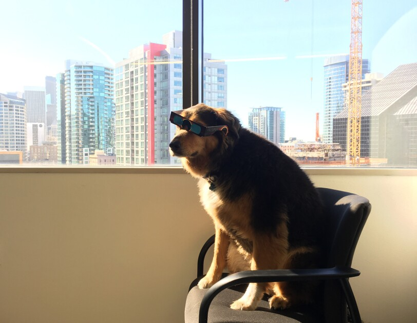 A dog in a chair sits next to a window in the sunshine. She is wearing sunglasses.