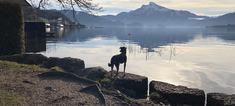 Utes Hund Conchi blickt auf einen See in Österreich. Im Hintergrund sieht man Wolken, Berge mit Schnee und Sonnenschein.