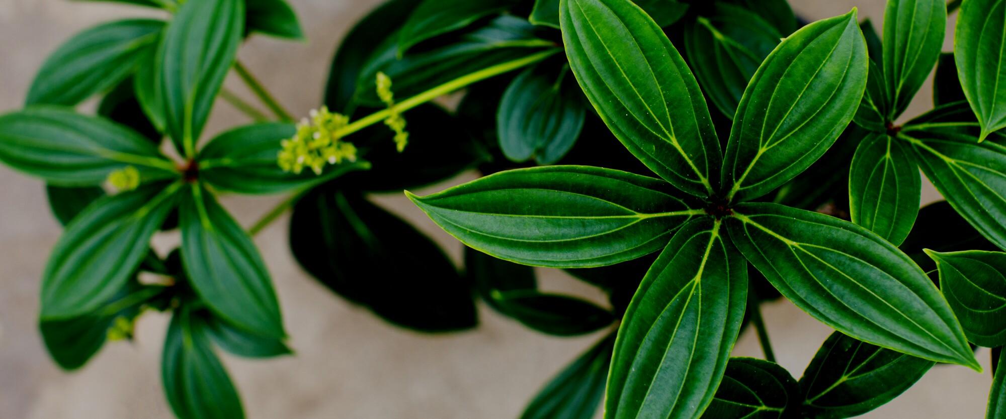 Woodinville Greenhouse - Amazon Spheres Plants