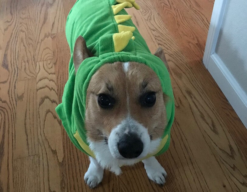 Dog wearing a dragon costume