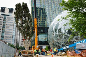 Rubi (The Spheres' Tallest Tree) Arrives in Seattle