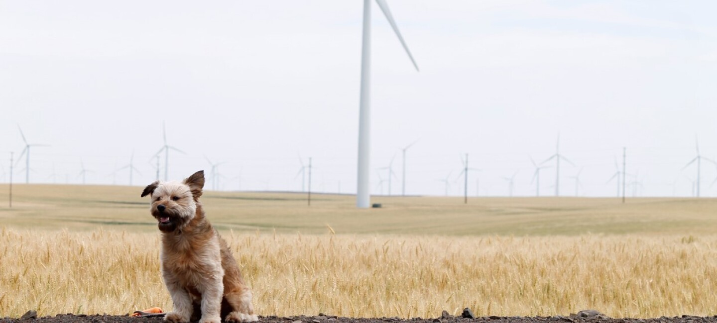 Dog at wind farm