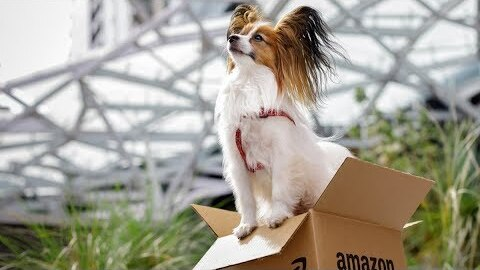 Meet some of the cutest dogs at Amazon