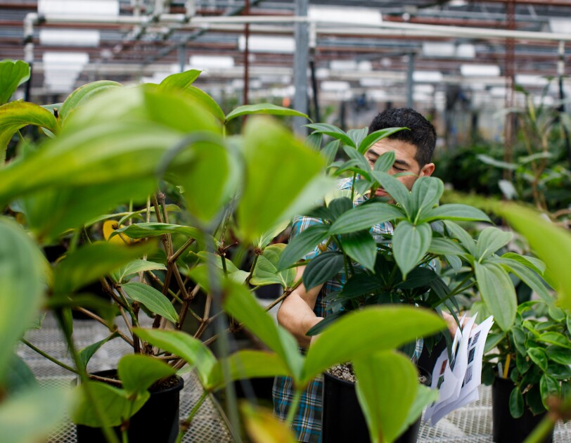 Amazon horticulturalist Michael Fong in greenhouse