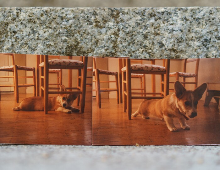 Two photos of Rufus, the first dog of Amazon. In one he is lying on the floor underneath a chair. In the other, he appears to be stretching.
