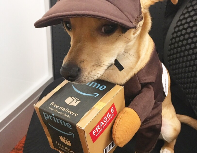 Dog wearing an Amazon Flex uniform, holding an Amazon Prime box with fake arms.