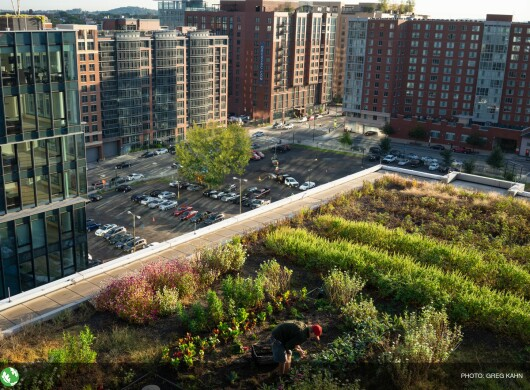 A man harvests vegetables from a rooftop garden covering a third of an acre in southeast Washington, D.C.