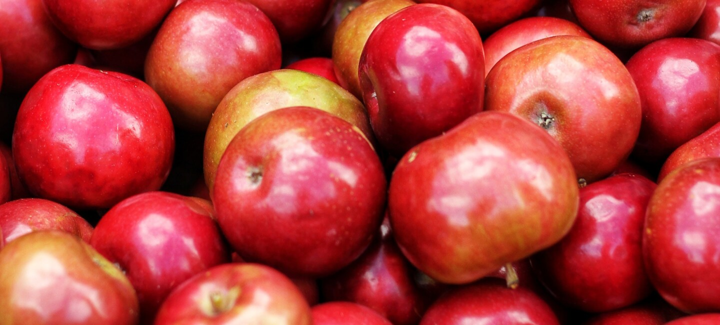 Dozens of shiny red and yellow apples of different sizes and shapes, from above.