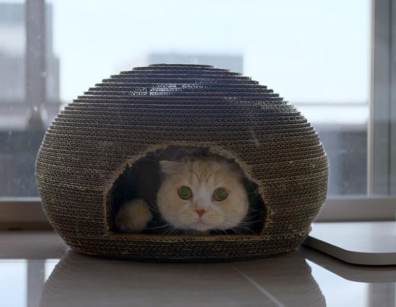 猫の幸せを第一に商品開発し世界へ