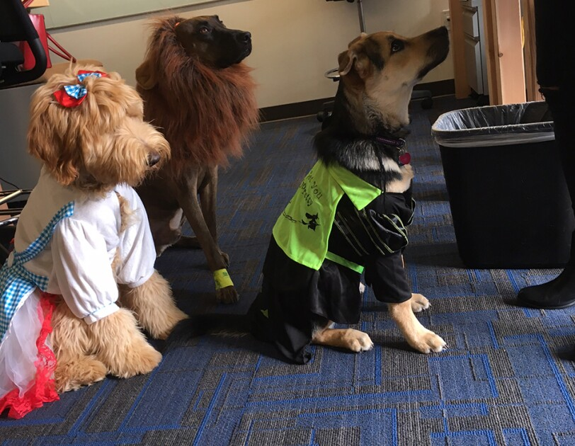 Three dogs dressed in costumes at Amazon offices, Dorothy from Wizard of Oz, a lion, and dracula.