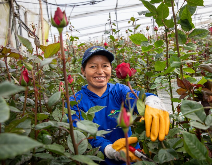 Whole Foods Market Whole Trade certified roses and the farmers who grow them.