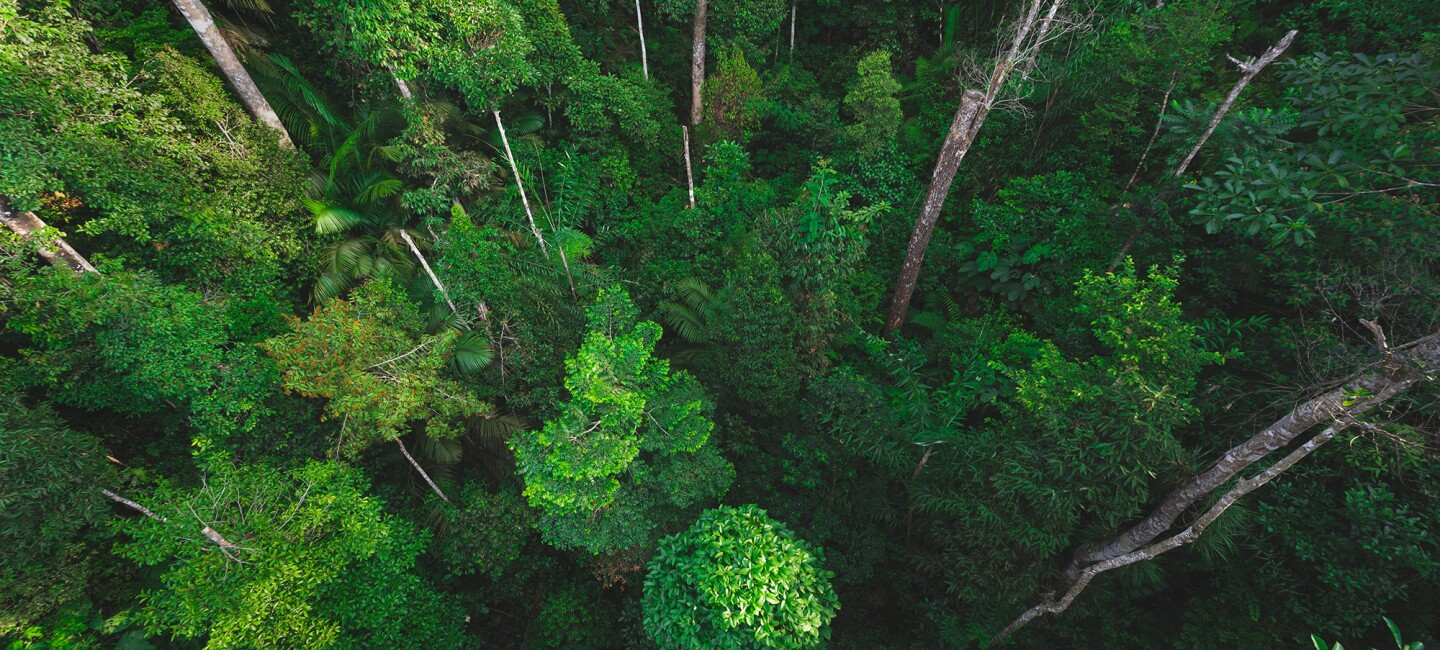 View of a forest canopy from above.