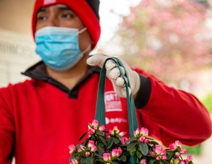 L'azalea della ricerca AIRC sollevata da un corriere BRT in uniforme rossa munito di guanti e mascherina protettiva