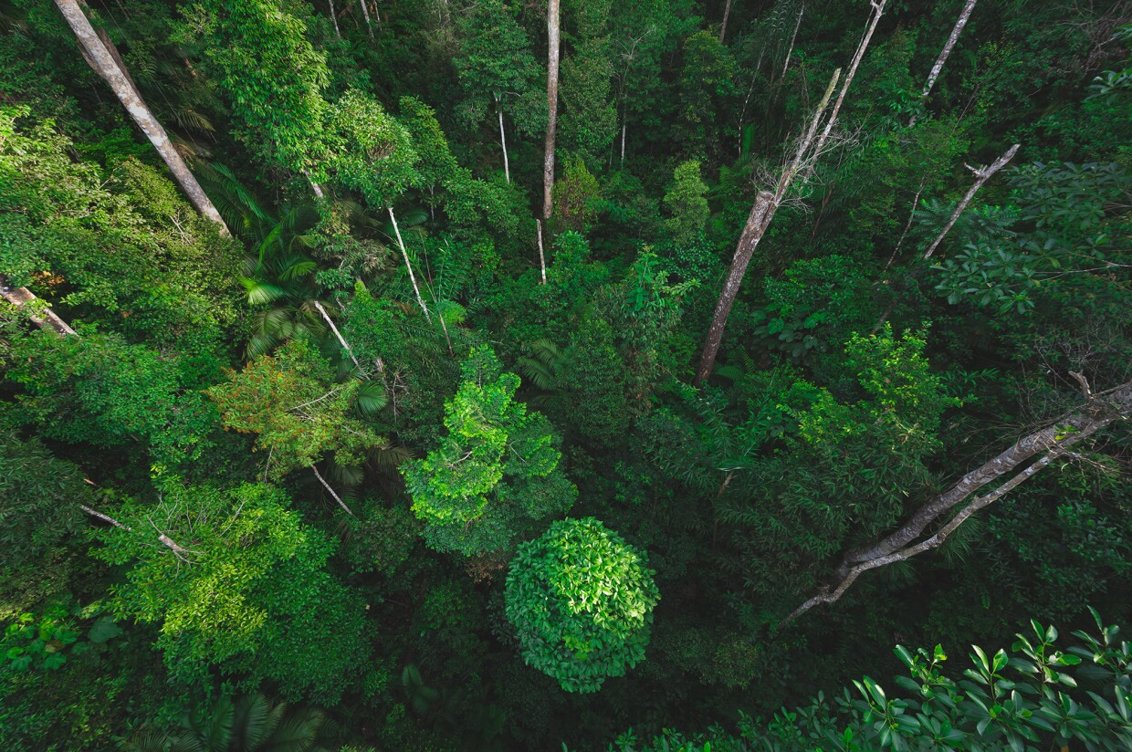 An image of bright green trees clustered together in a forrest.