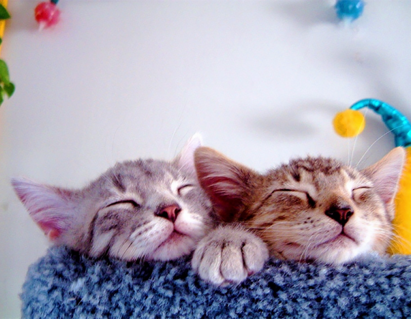 Two kittens snuggle together, eyes closed, as they rest on a carpeted cat structure.