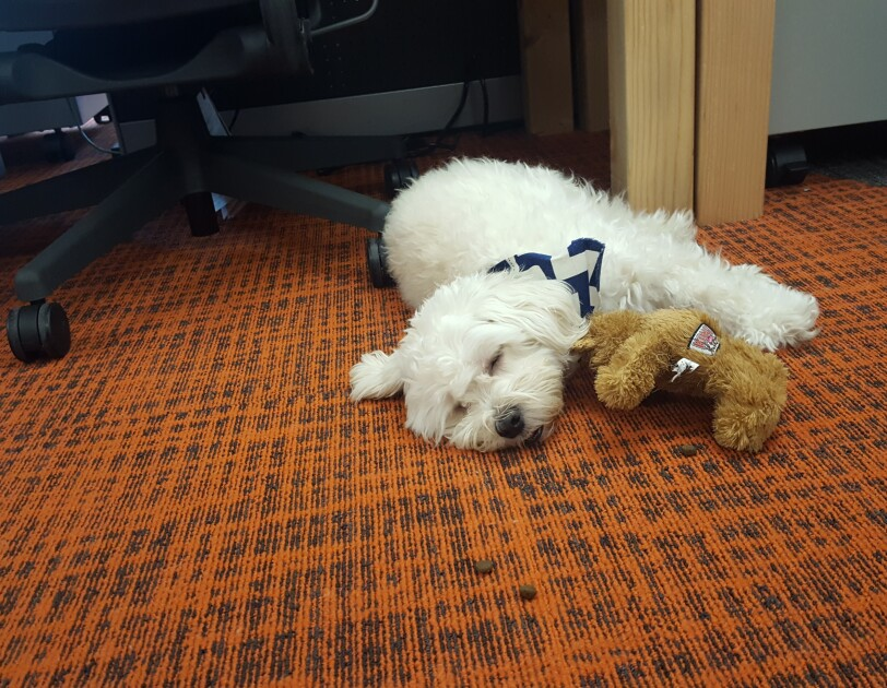 A white dog sleeps on an orange and brown carper with his toy bear under his arm.