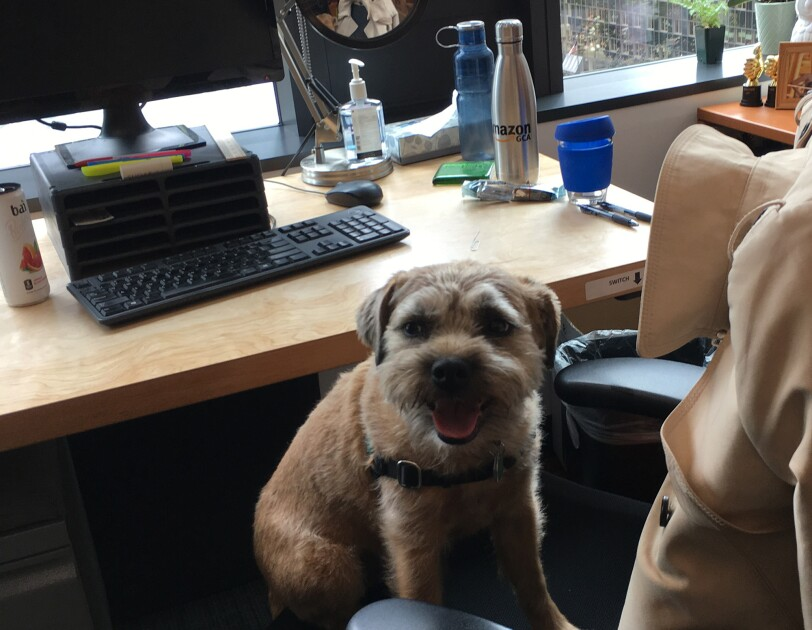 Dogs of Amazon - Dog on desk chair