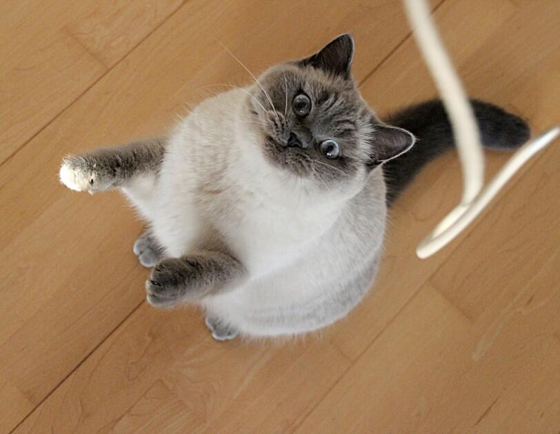 Bild von einer Katze, die nach oben springt