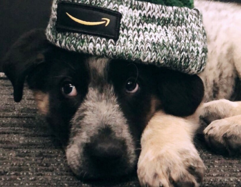 Dogs of Amazon - dog in stocking cap