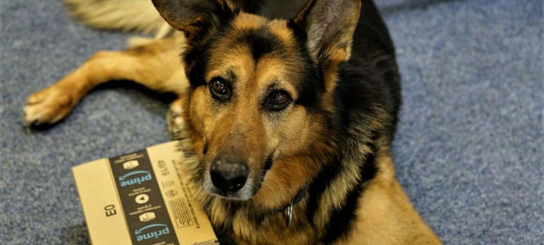 Ein Hund liegt auf dem Boden, neben ihm ein Amazon Päckchen.