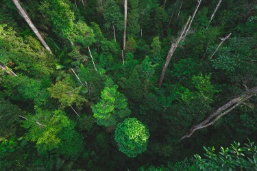 Plano vertical de un bosque con árboles azules muy altos.