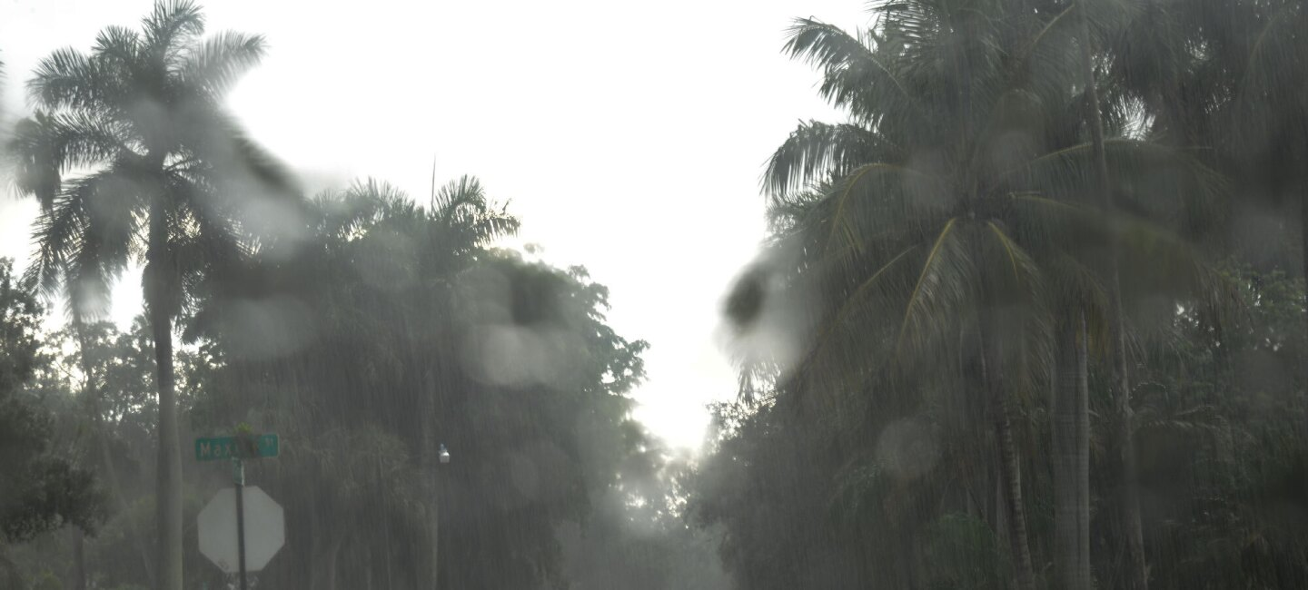 A file photo from 2017 showing rain-soaked palm trees during a hurricane