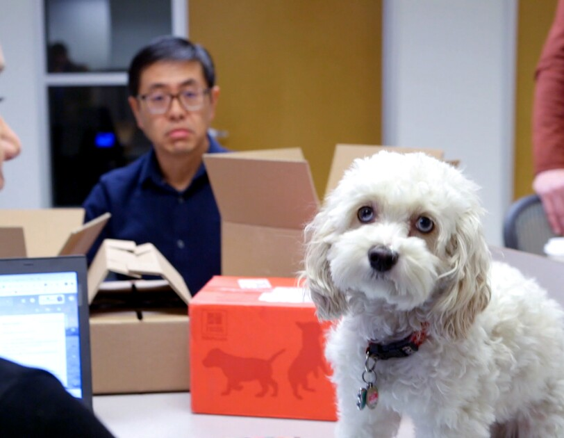 Two people in an office setting. A small white dog with blue eyes sits on one of the desks.