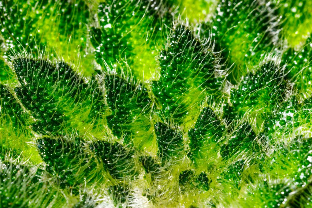 Macro photography of some of the 40,000 plants in the Seattle Spheres