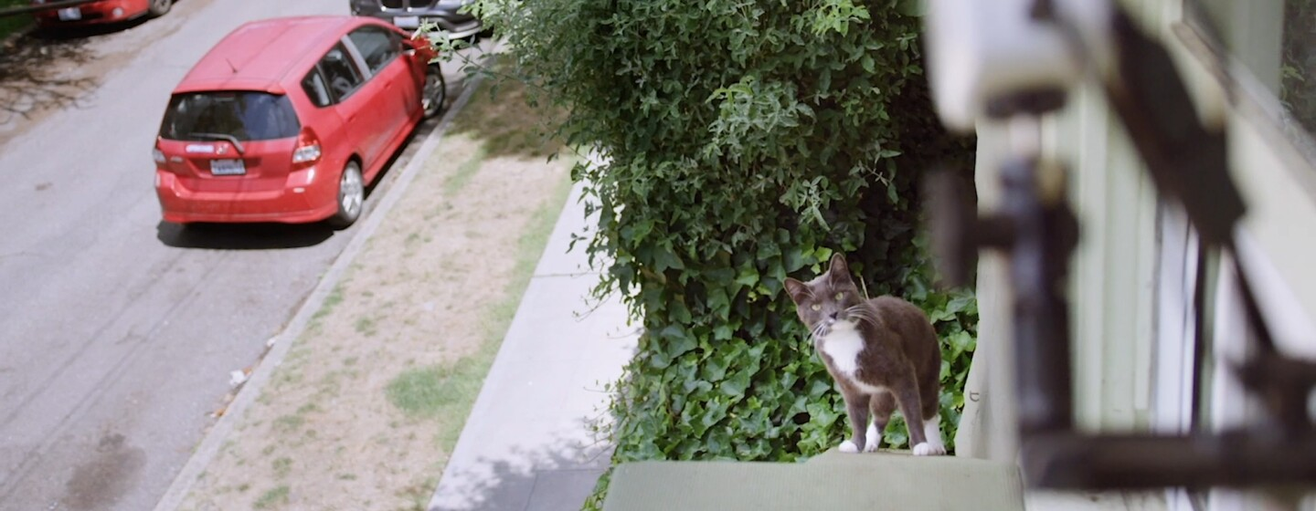 A cat on a ramp looks up toward the camera in the direction of a device mounted to a window.
