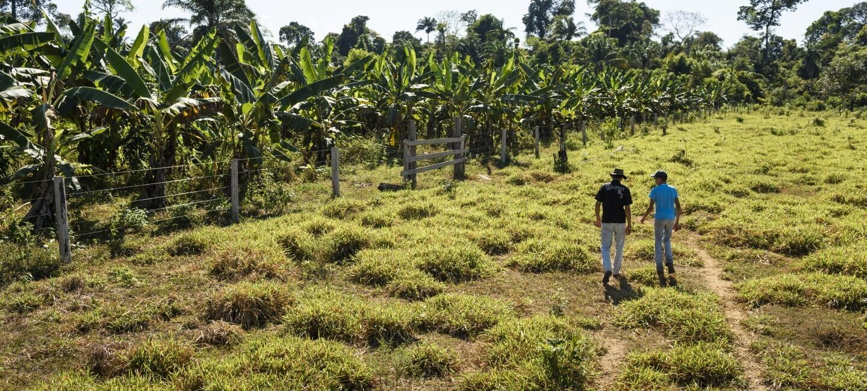 Panoramica di una piantagione in Brasile. Al centro due uomini ripresi di spalle camminano verso la piantagione.