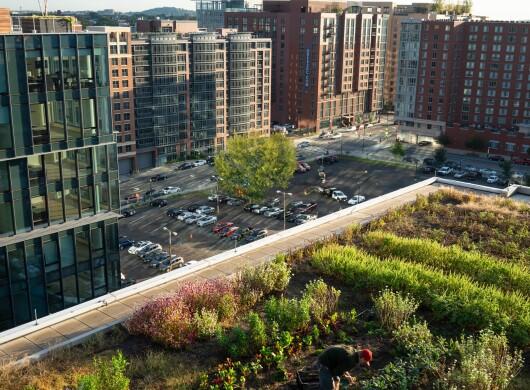 Rooftop garden in an urban setting.