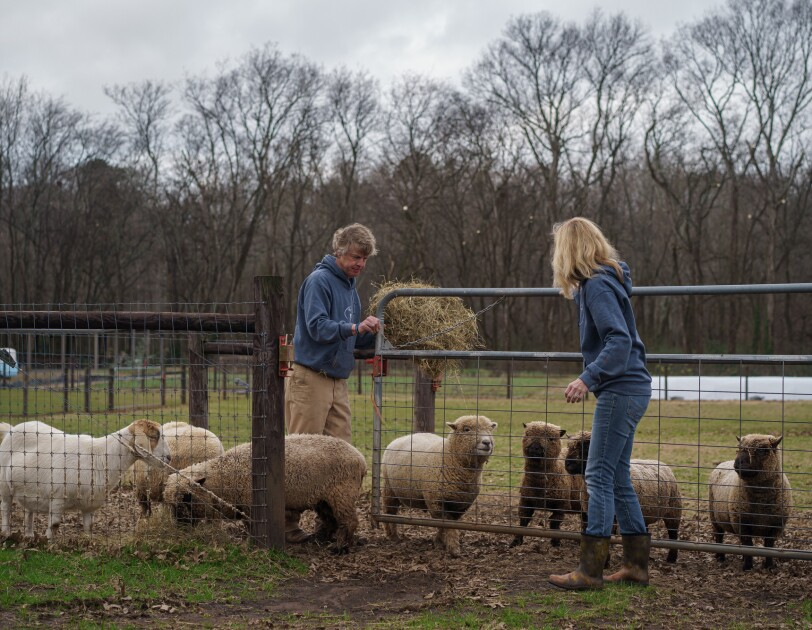 A woman and a man stand near a farm gate, as sheep and a goat mingle nearby.