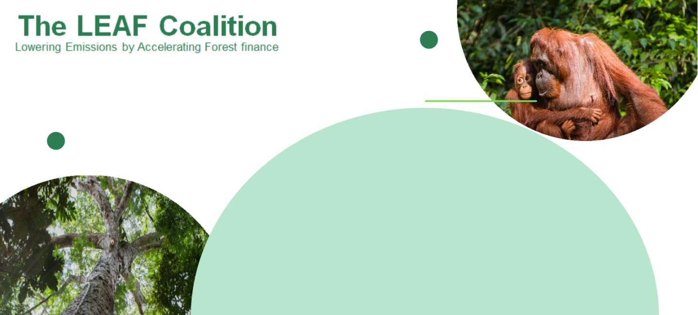 Amazon tritt der LEAF Koalition bei