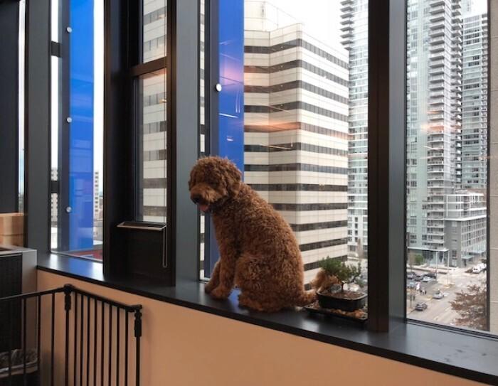 Amazon dogs
