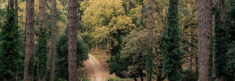 L'immagine mostra una area verde che ha beneficiato di un progetto di riforestazione. Al centro della foto c'è un sentireo e ai lati alberi verdi e tronchi di pino.