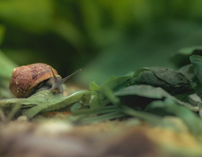 Una lumaca di Nuvò Cosmetic si ciba di foglie verdi