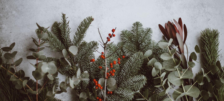 Tannenzweige, Nistelzweige, grüne Zweige, rote Beeren