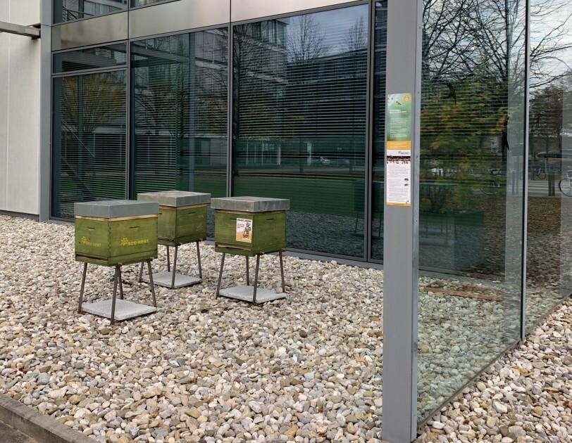 Drei grüne Bienenkästen stehen vor einem Gebäude.