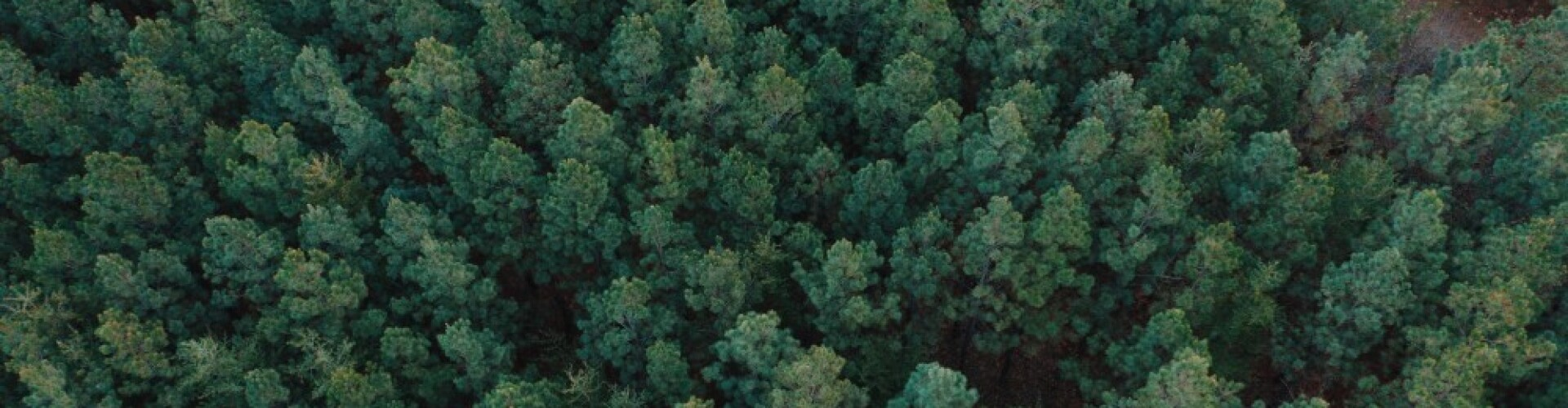 Forest Carbon Co-Ops. An overhead shot of a large forest with many trees.