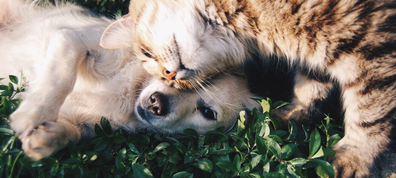 Ein Welpe und ein Katzenbaby schmusen miteinander.