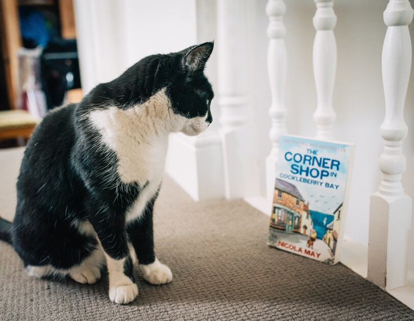 Nicola May's cat Stan with her book The Corner Shop in Cockleberry Bay