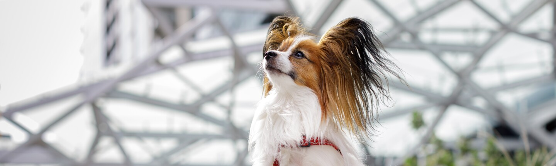 Dog of the Week - Frankie