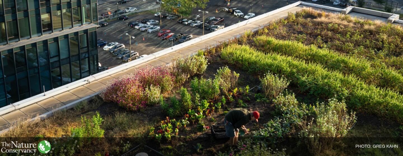 In primo piano il tetto di un edificio ricoperto da un orto. Un uomo con un cappello rosso è chinato a curare le piante. Sullo sfondo, un panorama urbano.