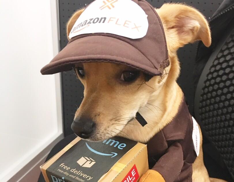 Dog wearing an Amazon Flex uniform, holding an Amazon Prime box with fake arms.