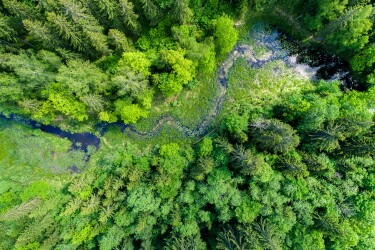 stock-photo-green-forest-swamp-and-small-river-captured-from-above-with-a-drone-659290924.jpg