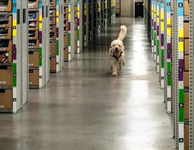 Rettungshund in FRA3